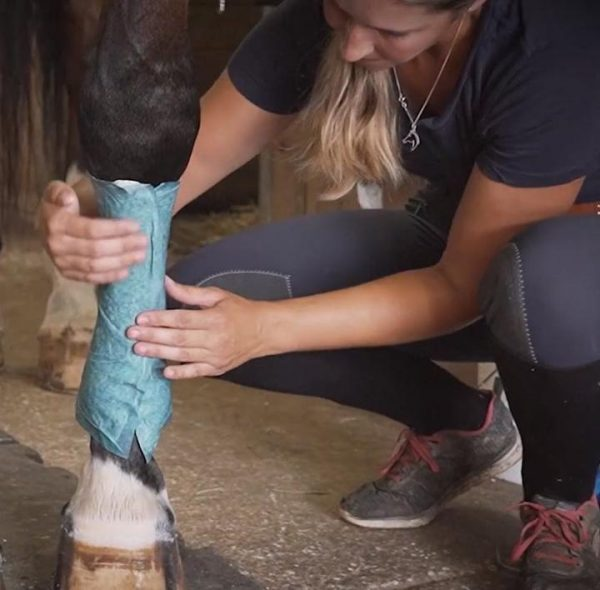Quinns Equine Poultice Wrap being applied to a horse's foreleg with girl holding wrap in place